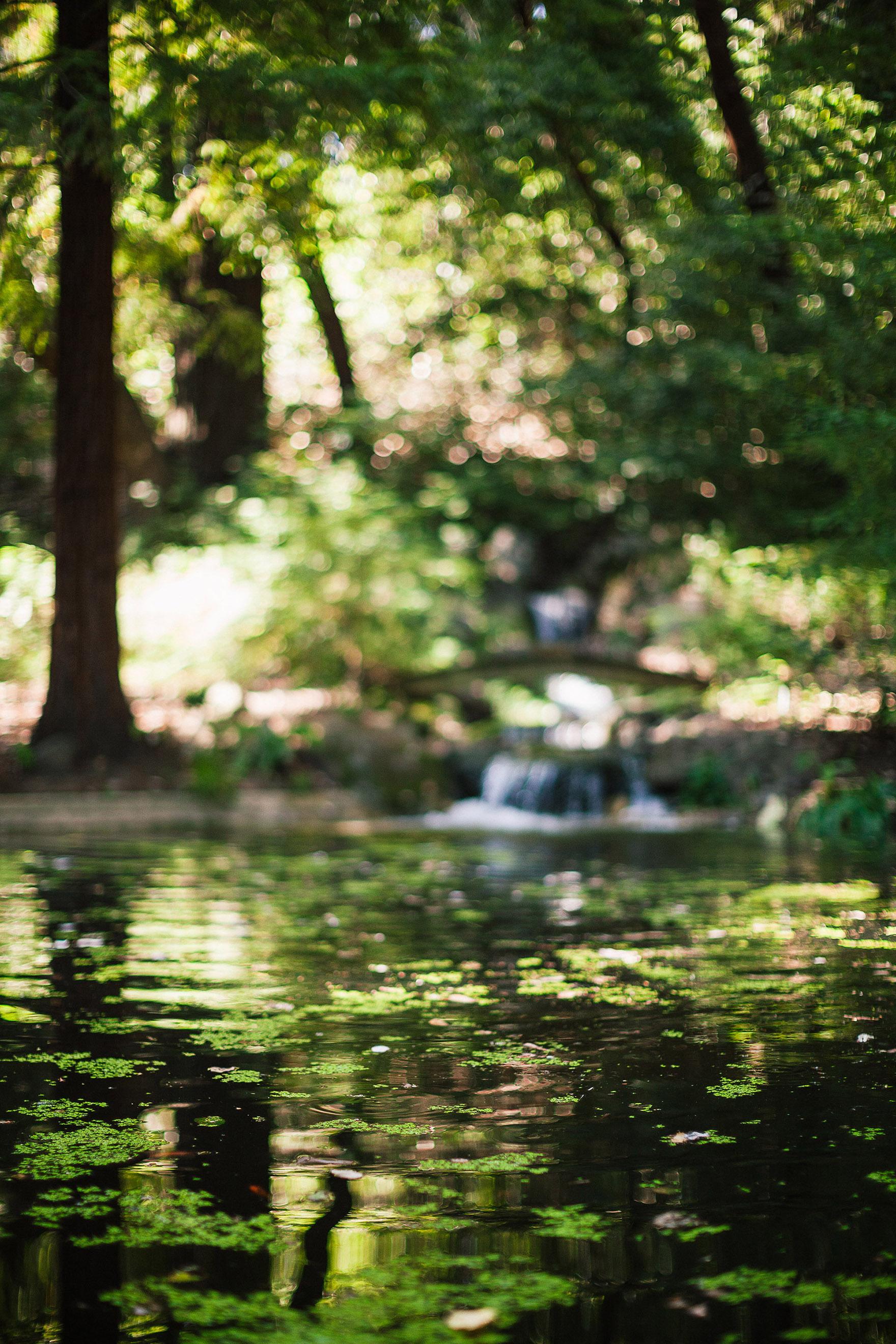 quiet waters of the pond at redwood ridge estate wedding redwood ridge wedding the perfect santa cruz wedding venue los gatos wedding venue