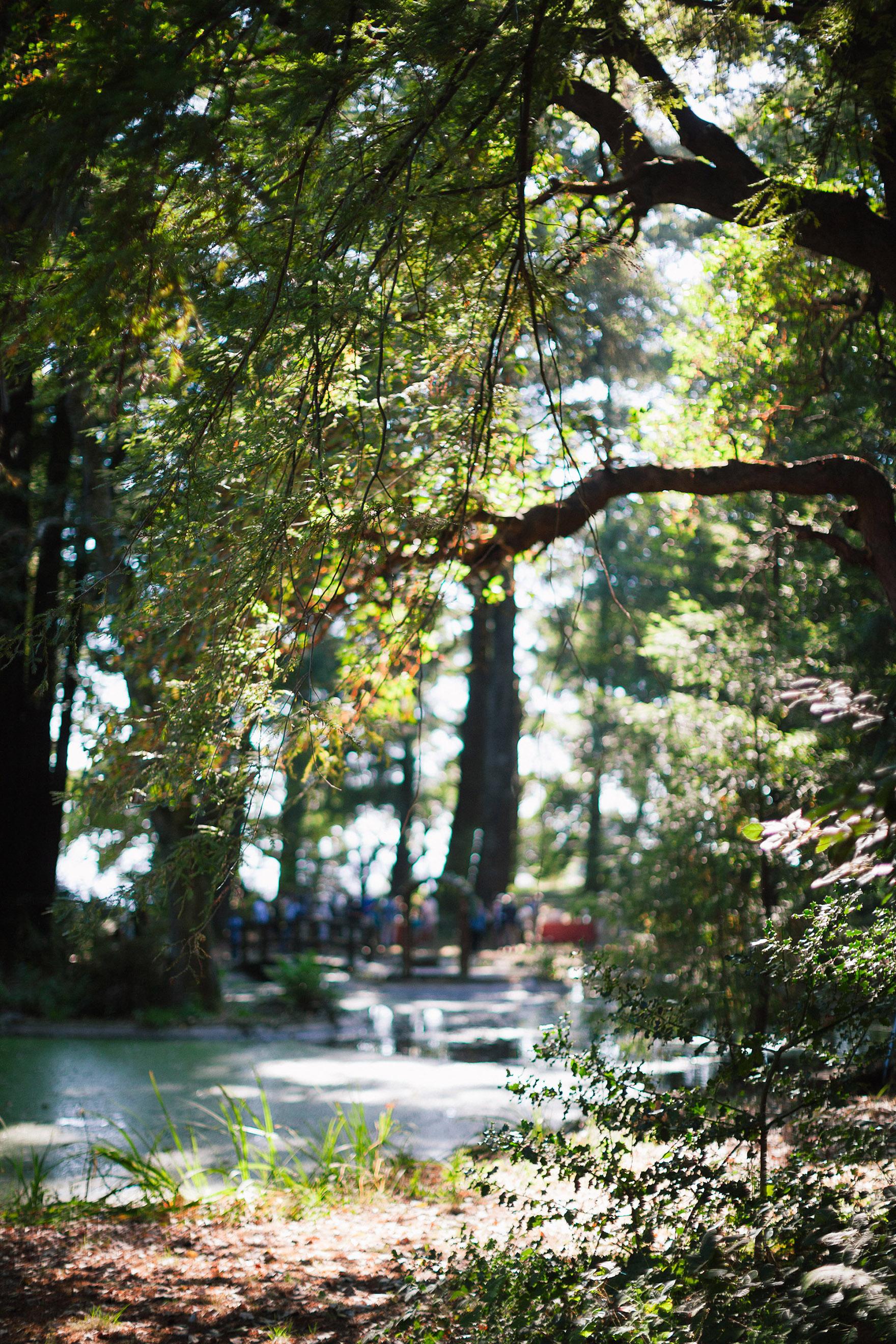 canon camera peeks through the trees over the pond lake at redwood ridge estate wedding redwood ridge wedding the perfect santa cruz wedding venue los gatos wedding venue