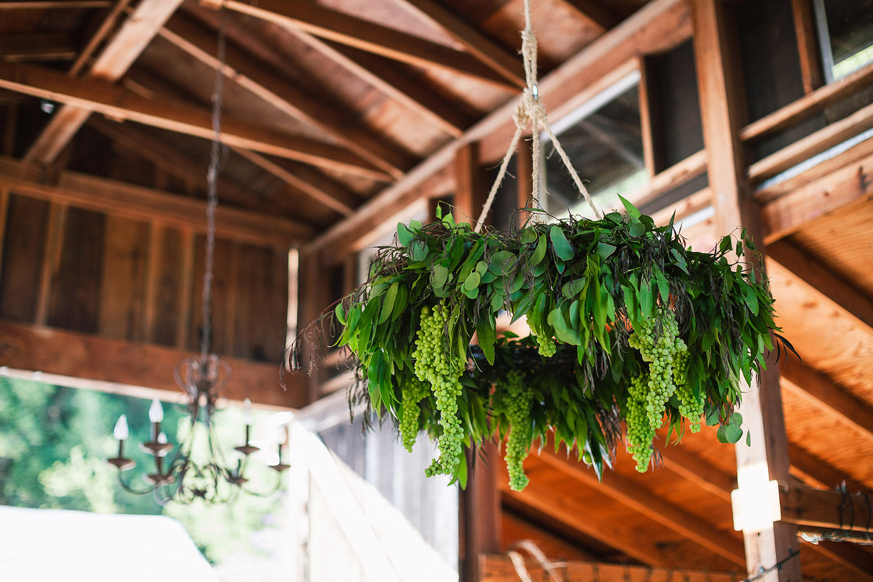 green hanging plants dangle from the rafters inside the barn from the ceiling decor chandelier lights at the wedding reception brides wedding reception redwood ridge estate wedding redwood ridge wedding the perfect santa cruz wedding venue los gatos wedding venue