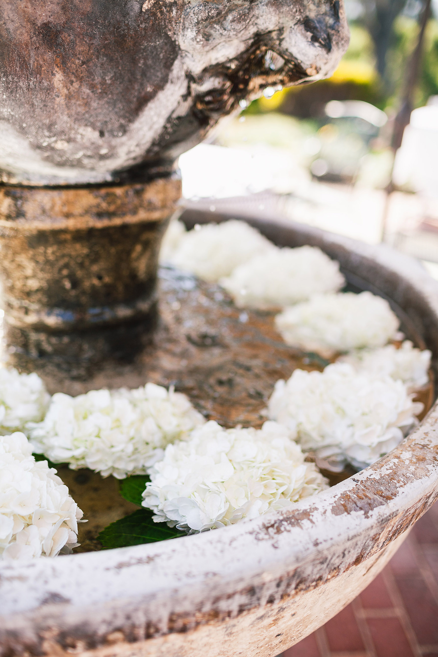 beautiful white floral arrangements flowers float in the old vintage antique water fountain at the pasatiempo golf course at the bride and groom newlywed hollins house wedding the perfect santa cruz wedding venue